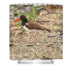 American Oystercatcher Shower Curtain