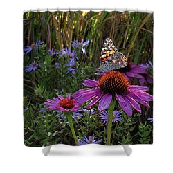 American Painted Lady On Cone Flower Shower Curtain