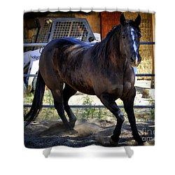 American Quarter Horse Miss Smokin' Blue Jeans Shower Curtain