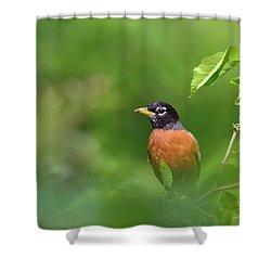 American Robin Shower Curtain