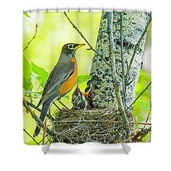 American Robin Feeding Chicks Shower Curtain