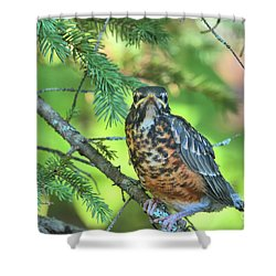 Shower Curtain featuring the photograph American Robin Fledgling by Debbie Stahre