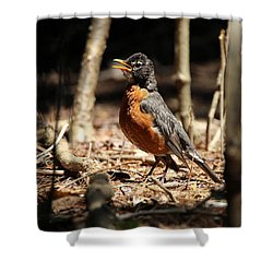 American Robin New York Shower Curtain by Bob Savage