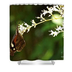 American Snout Shower Curtain by Audrey Van Tassell