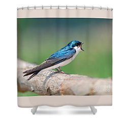 American Tree Swallow Shower Curtain
