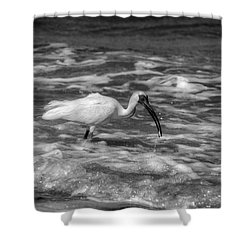American White Ibis In Black And White Shower Curtain