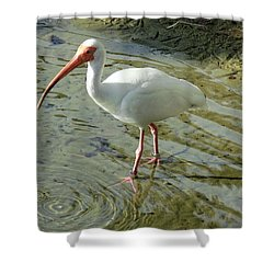 American White Ibis Shower Curtain