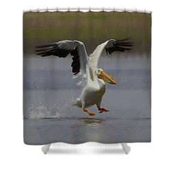 American White Pelican Da 3 Shower Curtain by Ernie Echols