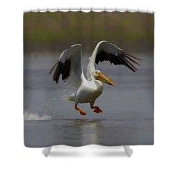 American White Pelican Da 4 Shower Curtain by Ernie Echols