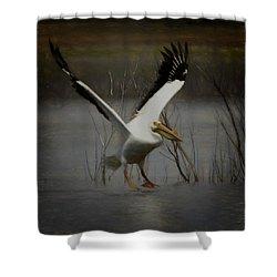 American White Pelican Da Square Shower Curtain by Ernie Echols