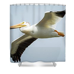 Shower Curtain featuring the photograph  American White Pelican Flyby  by Ricky L Jones