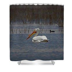 American White Pelican Searching Da Shower Curtain by Ernie Echols