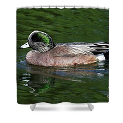 American Wigeon Anas Americana Duck Shower Curtain