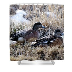 American Wigeon Mated Pair Shower Curtain