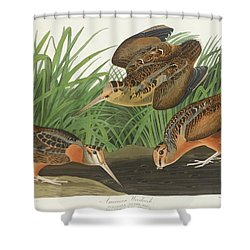 American Woodcock Shower Curtain
