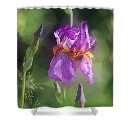 Amethyst Iris 2 Shower Curtain