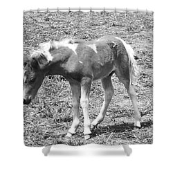 Amish Colt Shower Curtain by Eric  Schiabor