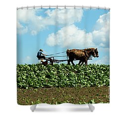Amish Farmer With Horses In Tobacco Field Shower Curtain