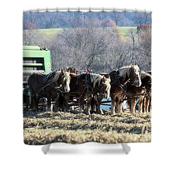 Amish Haymaker In Lancaster County, Pennsylvania Shower Curtain