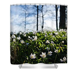 Shower Curtain featuring the photograph Among Windflowers On The Ground by Kennerth and Birgitta Kullman