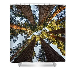 Amongst The Giant Sequoias Shower Curtain