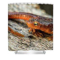 Amphibious Shower Curtain by Scott Warner