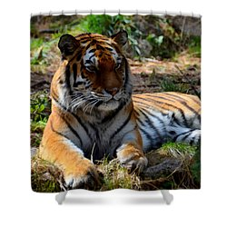 Shower Curtain featuring the mixed media Amur Tiger 1 by Angelina Vick