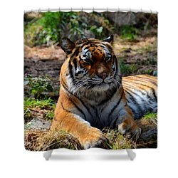 Shower Curtain featuring the mixed media Amur Tiger 10 by Angelina Vick