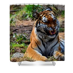 Shower Curtain featuring the mixed media Amur Tiger 3 by Angelina Vick