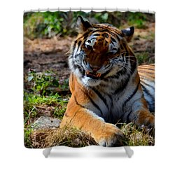 Shower Curtain featuring the mixed media Amur Tiger 4 by Angelina Vick