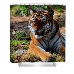 Shower Curtain featuring the mixed media Amur Tiger 5 by Angelina Vick