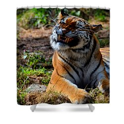 Shower Curtain featuring the mixed media Amur Tiger 6 by Angelina Vick