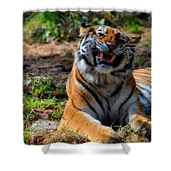 Shower Curtain featuring the mixed media Amur Tiger 7 by Angelina Vick