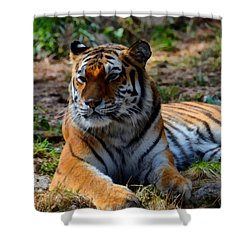 Shower Curtain featuring the mixed media Amur Tiger 8 by Angelina Vick