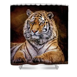 Amur Tiger Shower Curtain by Brian Tarr