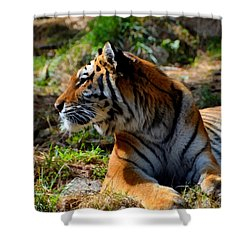 Shower Curtain featuring the mixed media Amur Tiger 9 by Angelina Vick