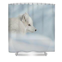 An Arctic Fox In Snow. Shower Curtain