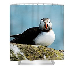 An Atlantic Puffin Shower Curtain