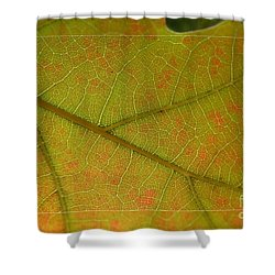 Shower Curtain featuring the photograph An Autumn Leaf by Jean Bernard Roussilhe
