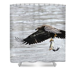 An Eagles Catch 10 Shower Curtain by Brook Burling