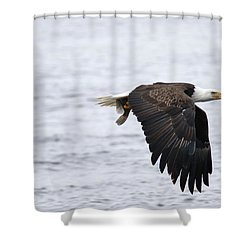 An Eagles Catch 11 Shower Curtain by Brook Burling