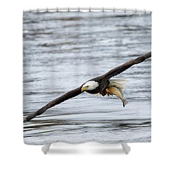 An Eagles Catch 12 Shower Curtain by Brook Burling