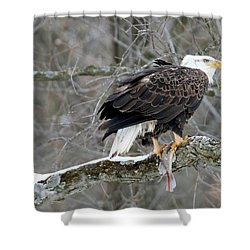 An Eagles Catch Shower Curtain by Brook Burling