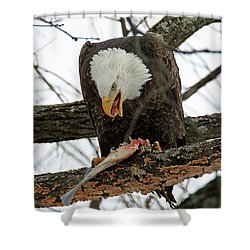 An Eagles Meal Shower Curtain by Brook Burling