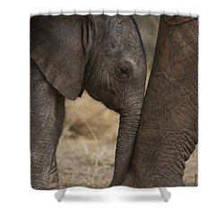 An Elephant Calf Finds Shelter Amid Shower Curtain