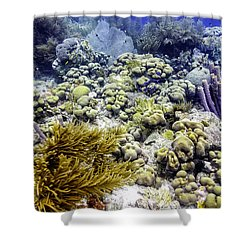 An Explosion Of Life II Shower Curtain