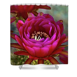 Shower Curtain featuring the photograph An Inner Beauty by Saija Lehtonen