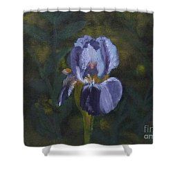 An Iris In My Garden Shower Curtain