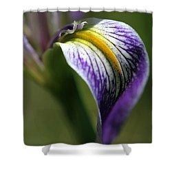 An Iris Petal Shower Curtain by Sabrina L Ryan