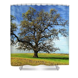 Shower Curtain featuring the photograph An Oak In Spring by James Eddy